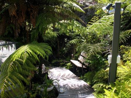 The boardwalk up to the deck. This can't be beaten for a cool, shady relaxing spot under the ferns