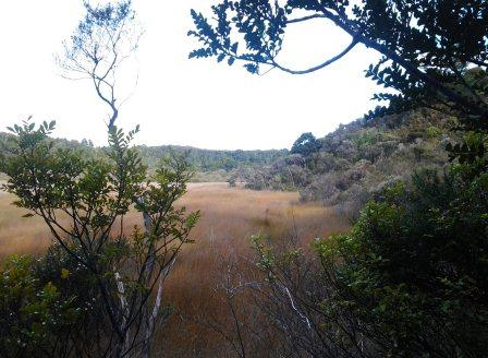 The Waiotoi wetland viewed from the bush track. Best walked in the morning or early evening to see the fernbirds